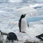 迷うペンギン